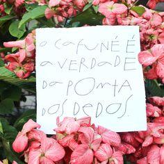 O Cafuné #frases