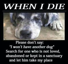 """When I die Please Don't say; """"I won't have another dog """" Search for one Who is not loved Abandoned or kept in a sanctuary and let the take my place I Love Dogs, Puppy Love, Cute Dogs, Animals And Pets, Cute Animals, Pet Loss Grief, Dog Poems, Pet Remembrance, Dog Search"""