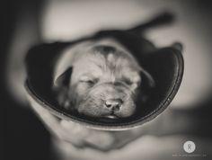 Labrador, Puppy  #Puppy  #Photography #B&W #animals