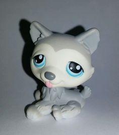 Littlest Pet Shop Dog Grey Gray White Siberian Husky Blue Eyes #70 Preowned LPS in Toys & Hobbies, Preschool Toys & Pretend Play, Littlest Pet Shop | eBay