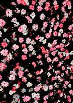 Fondo de pantalla ,flores
