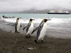 The Antarctic Peninsula...Primary residents include a small cadre of hearty research scientists; Adélie, chinstrap, and gentoo penguins; killer whales, or orcas; and Weddell and leopard seal