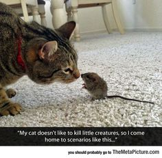 13 Important Advice on the Life of Cats - Best Adorable Animals Cute Funny Animals, Funny Animal Pictures, Cute Cats, Funny Cats, Cute Pictures, Funny Photos, Stupid Funny, Hilarious, Animal Pics