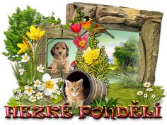 Beautiful Day, Fox, Animals, Animales, Animaux, Animal, Animais, Foxes