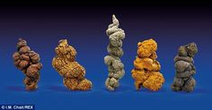 Also for sale are a selection of five stool-shaped specimens thought to have come from a M...