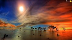 trees, clouds, viewes, Red, Great Sunsets, water