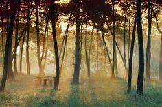 La razón por la que te sienta tan bien un paseo entre los árboles | Verne EL PAÍS