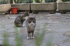 Los guardianes de la casa. @lantxurda