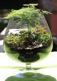 florarium, terrarium, grow little, garden, Akvareel,