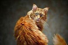 49 photos de chats a couper le souffle