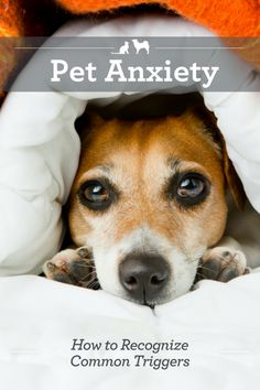 How to Recognize Common Pet Anxiety Triggers. Just like humans, pets can suffer from fear, anxiety and stress. The first step in helping them is understanding the common triggers that can bring it on. via @kristenlevine