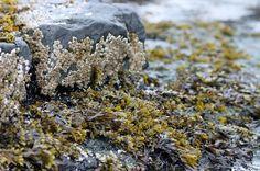 Gaspesie Winter Beach How To Dry Basil, Herbs, Desserts, Food, Tailgate Desserts, Deserts, Essen, Herb, Postres