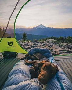 RV And Camping. Great Ideas To Think About Before Your Camping Trip. For many, camping provides a relaxing way to reconnect with the natural world. If camping is something that you want to do, then you need to have some idea Into The Wild, Photo Voyage, Tier Fotos, Go Camping, Outdoor Camping, Camping Dogs, Backpacking Hammock, Camping Cabins, Camping Packing
