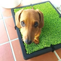 Faux Grass Indoor Pet Toilet