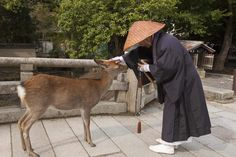 The deer roam free in Nara, Japan