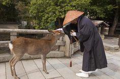 Nara | Insolit Viaje