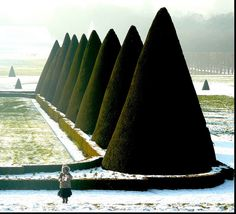 parc de sceaux... ~ beautiful topiary is especially beautiful in winter! when the pristine shape is most noticeable ...