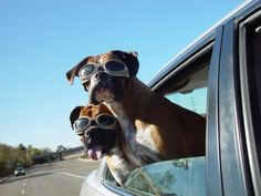 Road Trip with doggles... Need a pair of these