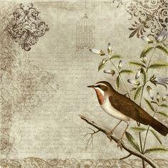 vintage bird wallpaper - Pesquisa Google