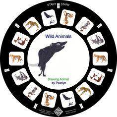 Wild Animal Illustrations on a Custom Reel