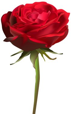 Beautiful Red Rose PNG Clip Art Image