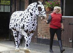 onesies for horses | Children 4 Horses: Very Latest Equine Fashion - Horse Onesies