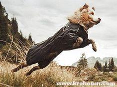Шлейка для собаки: шьем своими руками York Dog, Bald Eagle, Bird, Dogs, Animals, Animales, Animaux, Birds, Pet Dogs