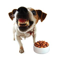 Who owns the kibble in your house, once it hits the dog bowl? Does Rover run you out of the kitchen when he is eating dinner? What happens if you need to take away a tasty rawhide?