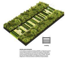 http://portarchitects.com/project/national-hedge/Axon-Scenario-Woodland-72.jpg