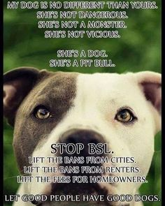 """As an owner of 19 month old female blue nose pit bull, I know first hand that pit bulls are an extremely loving, peaceful breed. Also I know first hand what it is like to have to move out of your home for owning a breed of dog that is considered """"aggressive."""" Some people are ignorant and don't know the facts. Zara is so sweet, full of love and lots of kisses who has changed my life for the better. I will never stop advocating because I know that we can change the misconceptions and myths…"""