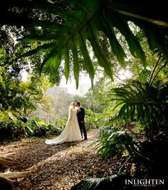 Location » Hyde Park Sydney.   Romantic, imaginative, stunning, serene,  lovely, environment. Ideal for outside wedding portraits