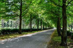 Trees in park stock photo