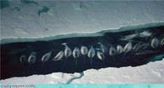River of Narwhals-the squee unicorns of the sea!