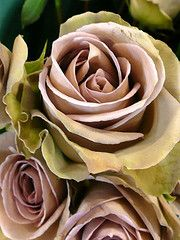 Amnesia rose, had these at my wedding... Sigh :)