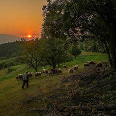 Günaydın Doğa  #günaydın #goodmorning #gunaydin #bonjour #sunshine #şükür #grateful #innerjourney #nefes #love #wakeup #hamdolsun #namaste #doğa #doğalyaşam #huzur #nature #namaste #lovenature #lovelife #enjoy #peace #livesimply #dreams #forest #sheep #peace