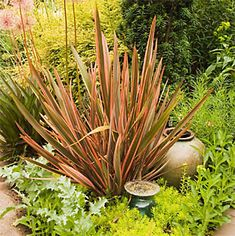 Phormium 'Maori Maiden' . Could go in trough planters - kind of same as before but not crowded - this is smaller - a row of them - nice and simple , if enough sun.