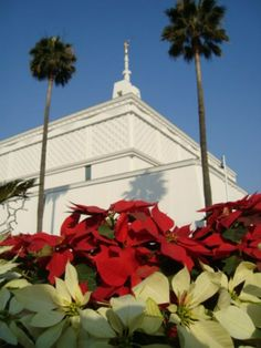 Mexico City Mexico Temple with poinsettias. #lds #mormon #temple #Christmas