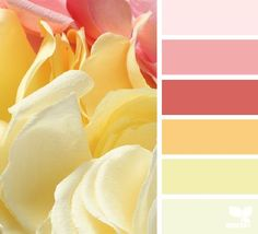 Petaled spectrum color palette inspiration