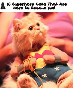 16 Superhero Cats That Are Here to Rescue You!