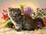 Virágok és kiscicák