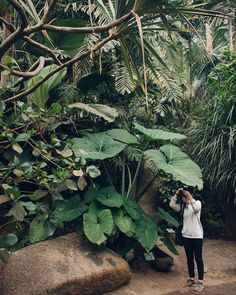 Remembering warmer less rainy times when India got really interested in the underside of this leaf at @edenprojectcornwall #HaarkonGreenhouseTour