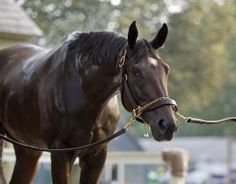Royal Delta ready for the Breeder's Cup Ladies Classic