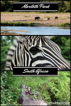 A weekend among zebras and elephants, what more could I ask? A fun time spent exploring Marloth Park, South Africa.   #southafrica