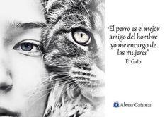 Frases gatos