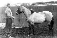 Criollo horse, 1950s