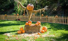 Home & Family - Tips & Products - Last Minute Outdoor Halloween Décor | Hallmark Channel  *This has the window silhouette templates I wanted to do this year and couldn't make right!