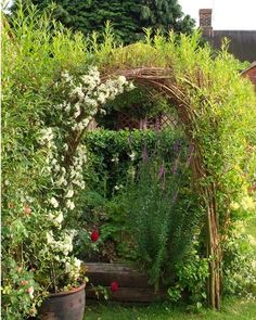 living willow arch idea - wait until a few years go by, it'll show giant tree trunks!