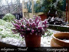 #2015projet52 #semaine5 #froid Ici il neige ... Excellente photo sur le Froid http://www.bejiines.fr/p/projet-52-2015.html