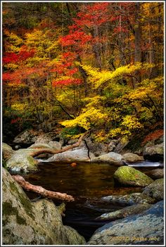 Great Smoky Mountains National Park; photo by Charlie Choc