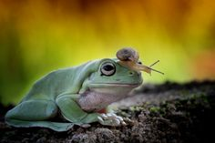 Frog & friends - null